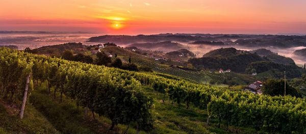 Weinproben in der Region Podravje
