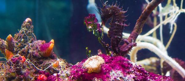 Neben süßen Schildkröten findet ihr auch außergewöhnliche Meeresbewohner im Aquarium Pula.
