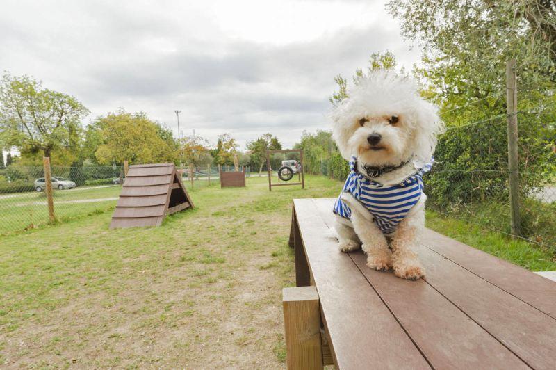 Hund auf Campingplatz